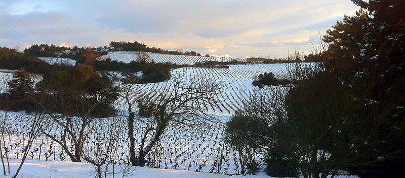 snow in the vines in limoux