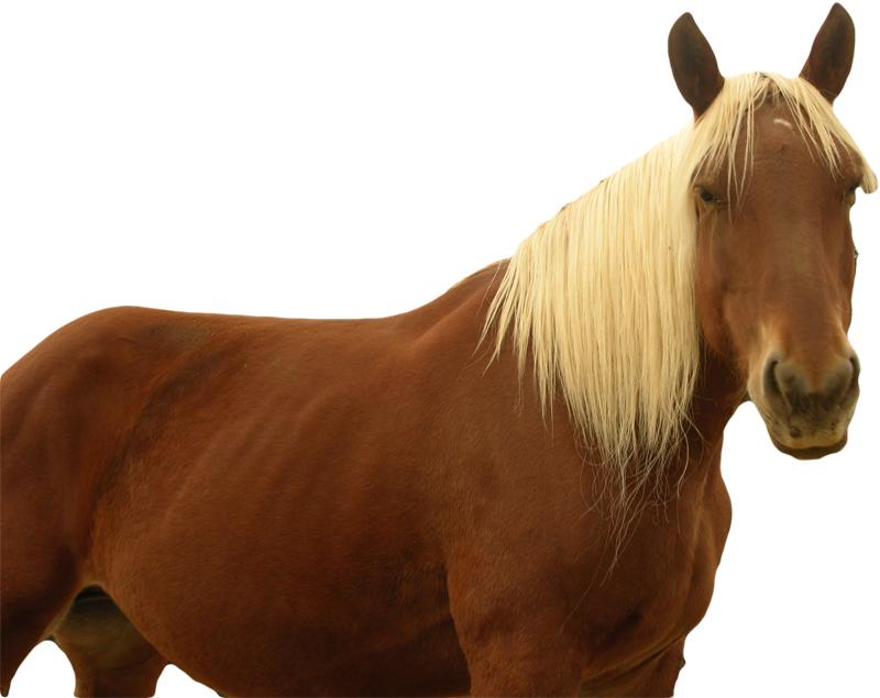 cheval fontedicto