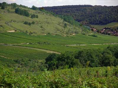 vignes saint aubin bourgogne