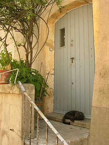 scène ordinaire pezenas chat