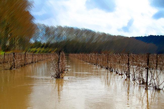 inondation-pezenas-vigne-languedoc