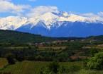 latourdefrance-vignes-canigou