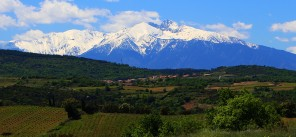 latourdefrance-vignes-canigou