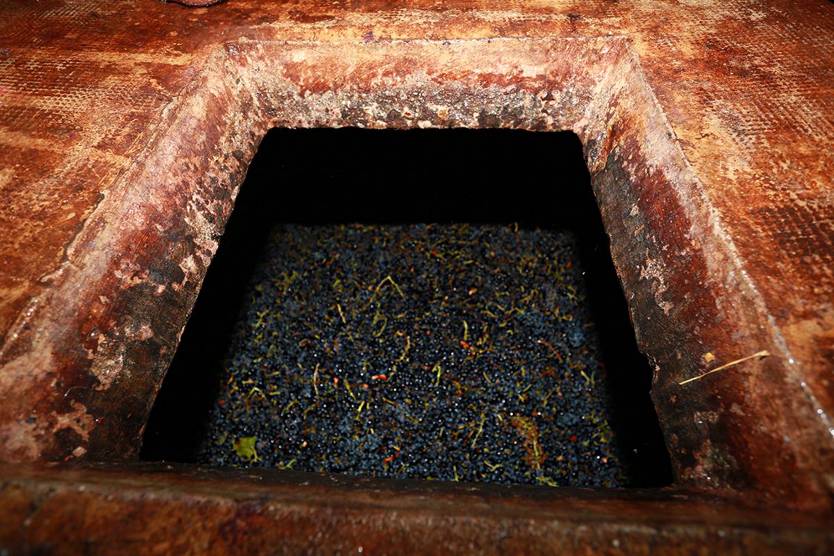 Ivo ferreira balance tout du haut de son escarpolette for Amenager une cave a vin