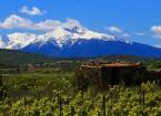 vigne tourisme