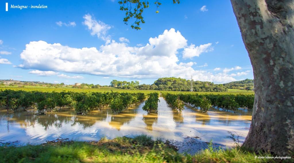 photo inondation vigne languedoc hérault montagnac