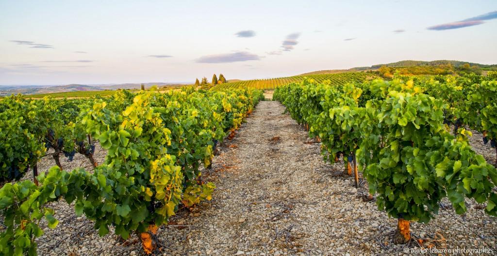 le vignoble de pezenas appellation du languedoc vin