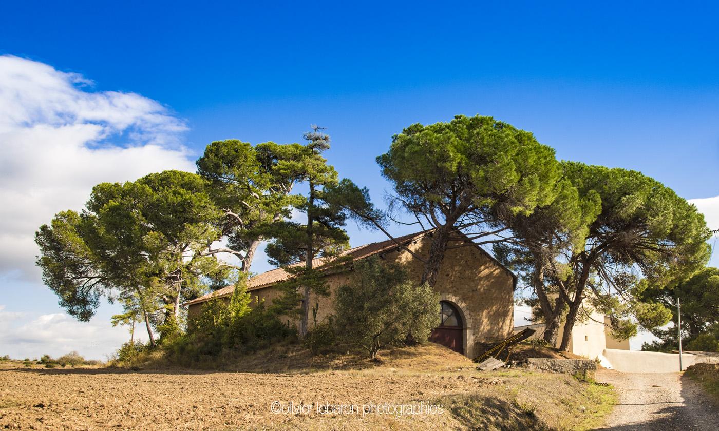 domaine viticole pezenas